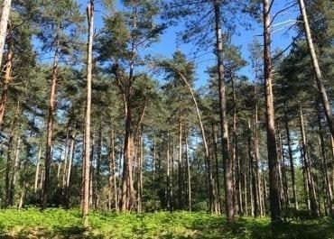 Promenons nous dans les bois Halatte Nord